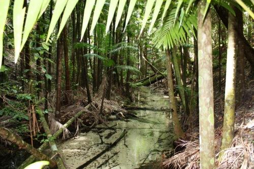 Écosystème des forêts humides